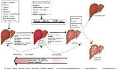 evolutia-bolilor-de-ficat-3